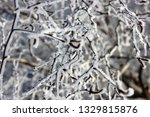 morning frost painted birch... | Shutterstock . vector #1329815876