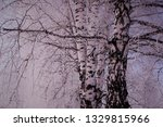 morning frost painted birch... | Shutterstock . vector #1329815966