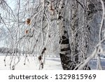 morning frost painted birch... | Shutterstock . vector #1329815969