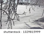 morning frost painted birch... | Shutterstock . vector #1329815999