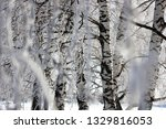 morning frost painted birch... | Shutterstock . vector #1329816053