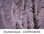 morning frost painted birch... | Shutterstock . vector #1329816056