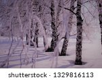 morning frost painted birch... | Shutterstock . vector #1329816113