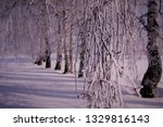 morning frost painted birch... | Shutterstock . vector #1329816143
