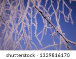morning frost painted birch... | Shutterstock . vector #1329816170