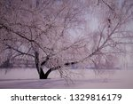morning frost painted birch... | Shutterstock . vector #1329816179