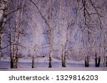 morning frost painted birch... | Shutterstock . vector #1329816203