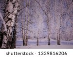 morning frost painted birch... | Shutterstock . vector #1329816206