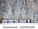 morning frost painted birch... | Shutterstock . vector #1329816209
