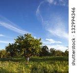 An Apple Tree Garden In...