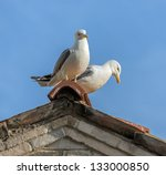 Seagull Sits At The Top Of The...