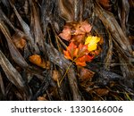 autumn leaves on the ground ... | Shutterstock . vector #1330166006