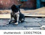 a neglected kitten   Shutterstock . vector #1330179026