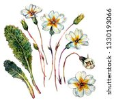 Watercolor Botanical...