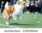 Collie Dog Running And Biting A ...