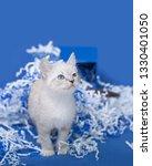 white kitten inside of a blue... | Shutterstock . vector #1330401050