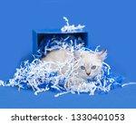 white kitten inside of a blue... | Shutterstock . vector #1330401053