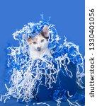 white calico kitten inside of a ... | Shutterstock . vector #1330401056