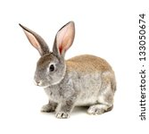 Stock photo grey rabbit on a white background 133050674