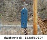 giraffe at the zoo   Shutterstock . vector #1330580129