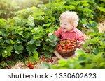 child picking strawberry on...   Shutterstock . vector #1330602623