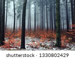 pine trees and small trees have ... | Shutterstock . vector #1330802429