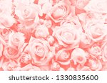 Stock photo living coral background made of roses and many flowers copy space color of the year nature 1330835600
