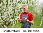 farmers hands with freshly... | Shutterstock . vector #1331016056