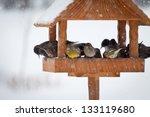 Winter Birds In Animal Feeder