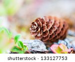 Big Pine Cone Fallen From The...