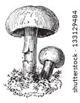 Fairy Ring Mushroom Or...