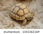 Stock photo close up baby african spurred tortoise resting in the garden slow life africa spurred tortoise 1331362169
