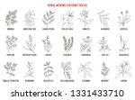 best herbs for kidney disease.... | Shutterstock .eps vector #1331433710