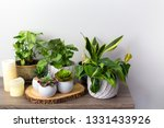 artificial succulents with... | Shutterstock . vector #1331433926