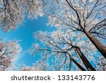 snow and frost covered locust... | Shutterstock . vector #133143776