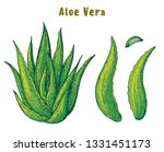 aloe vera hand drawn. vector... | Shutterstock .eps vector #1331451173
