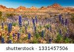 bluebonnets bloom in big bend... | Shutterstock . vector #1331457506