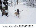 dog  shepherd  german  animal ... | Shutterstock . vector #1331459720