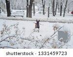 dog  shepherd  german  animal ... | Shutterstock . vector #1331459723
