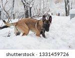 dog  shepherd  german  animal ... | Shutterstock . vector #1331459726
