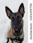 dog  shepherd  german  animal ... | Shutterstock . vector #1331459750