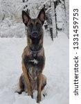 dog  shepherd  german  animal ... | Shutterstock . vector #1331459753