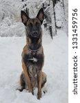 dog  shepherd  german  animal ... | Shutterstock . vector #1331459756