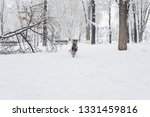 dog  shepherd  german  animal ... | Shutterstock . vector #1331459816