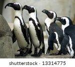 a group of african penguins...   Shutterstock . vector #13314775