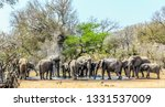 big breeding herd and family of ... | Shutterstock . vector #1331537009