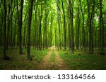 Trail Into A Green Forest