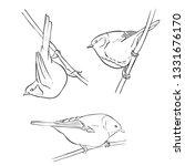 vector line drawing bird... | Shutterstock .eps vector #1331676170