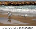 seagulls on the beach of... | Shutterstock . vector #1331688986