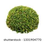 bush isolated on white... | Shutterstock . vector #1331904770